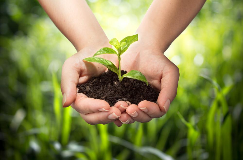 """Limpeza verde: por que apostar em terceirizadas """"eco friendly""""?"""